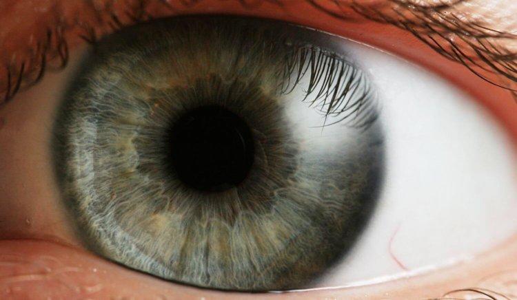 Радужка глаза