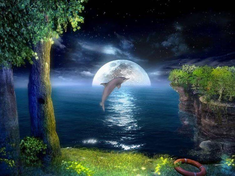 Дельфин в ночи