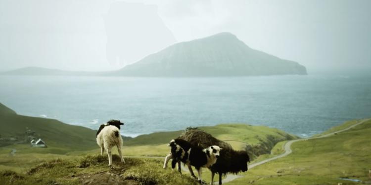sheep-view-360