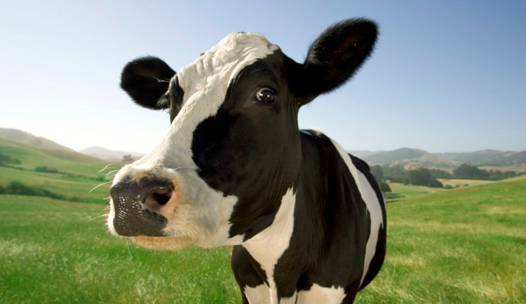 dirty_cow