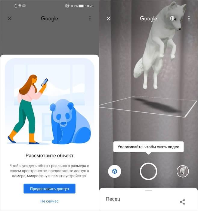 В Google появились новые 3D-животные. Как смотреть на Android